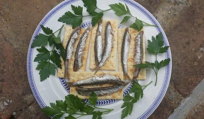 Dopo gli elogi alla sardina e alla trota, ecco a voi l'acciuga!