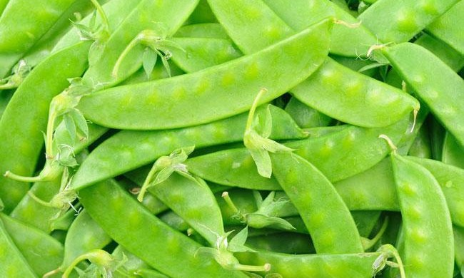 Le taccole: ortaggi o legumi?