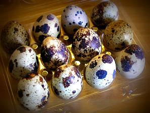 Uova di quaglia: piccole ma non da sottovalutare