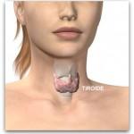 Come risvegliare la tiroide