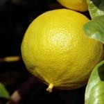 Le proprietà del bergamotto