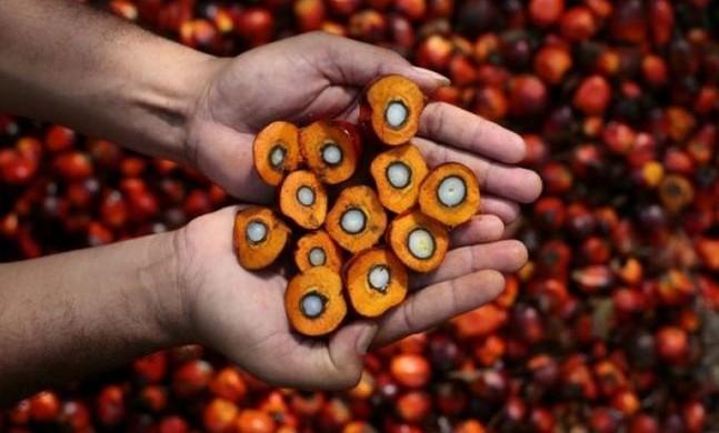 La mia opinione sull'olio di palma
