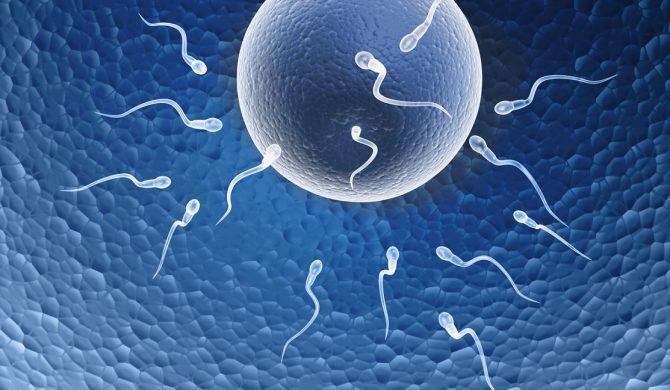 Fertilità e peso corporeo
